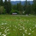 2012 - 06 - 02 - Saltspring3 - campfield-e